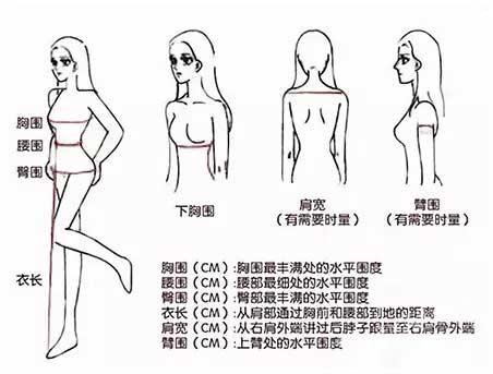身体结构图 小腿